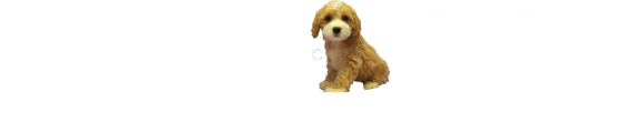 Shake A Paw Rescue and Adoption Center : The Shake A Paw Rescue and Adoption Center is a Registered New Jersey Charitable, Non-Profit organization created to provide animal rescue, shelter and adoption services.