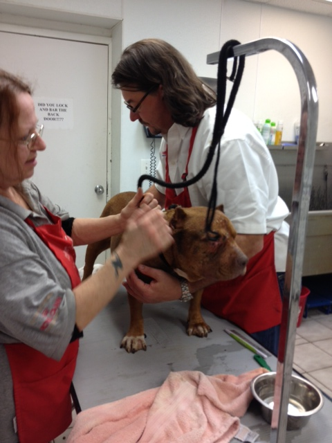 Owner Jeff Morton and a veterinary technician work to clean up her wounds